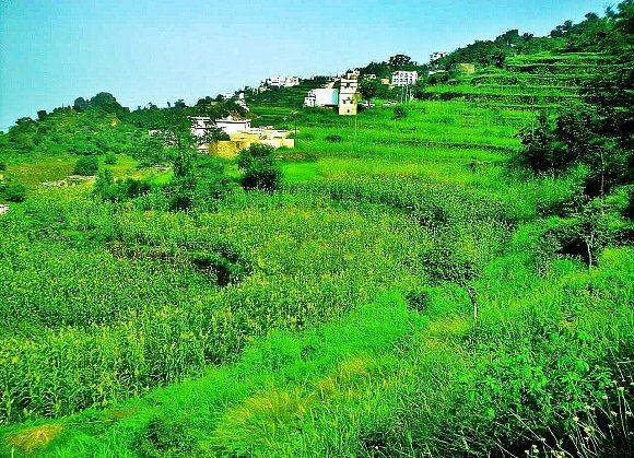 صورة الزراعة